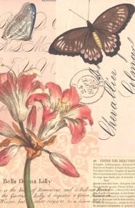 Cavallini Paper: Carte Postale
